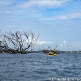 Giant driftwood trees run aground on Myrtle Island.